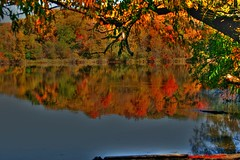 Fall colors and reflections (Anton Shomali - Thank you for over 600K views) Tags: autumn trees red orange usa lake chicago cold green fall nature water colors yellow america reflections season gold us illinois flickr branch branches il itasca fallcolorsandreflections
