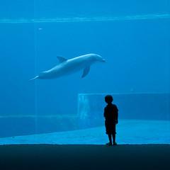 immersi.... (zecaruso) Tags: aquarium child dolphin genova acquario ze delfino bambino zeca renzopianobuildingworkshop tursiope nikond300 zecaruso cicciocaruso zequadro ze