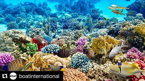 #Underwater #Repost @boatinternational with @repostapp