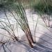 sand und gras