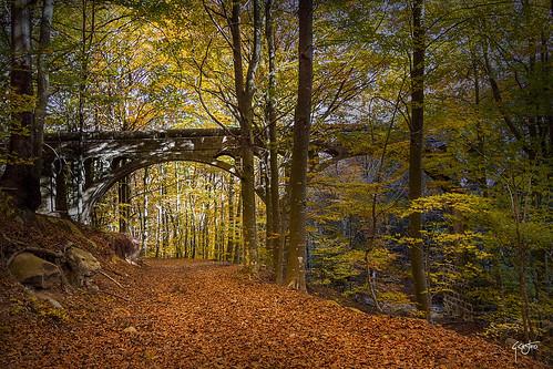 autumn-montseny