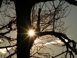 soleil arboricole