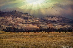 Christmas Day 2015 (buffdawgus) Tags: ranch northerncalifornia landscape sutterbuttes californa sacramentovalley buttecounty ranchland canon7d canon1585mmusmis lightroom5 topazsw