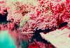 Tilted Infratrees (dE fENDER) Tags: infrared eir kodakeir serebryanovinogradnypond