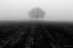 Remember (AvideCai) Tags: avidecai paisaje bn blancoynegro arbol tamron2470 niebla