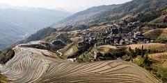 Longji (GavinZ) Tags: guilin longji rice ricepaddies riceterrace china asia farm village landscape 桂林 中国 广西