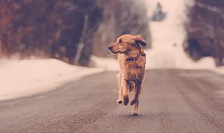 casual jog