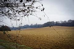 Collines du Gers (domingo4640) Tags: gers champ agriculture hiver colline eglise paysage chemin