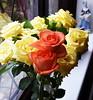 DSC_4272 (PeaTJay) Tags: nikond750 reading lowerearley berkshire macro micro closeups gardens indoors nature flora fauna plants flowers rose roses rosebuds