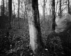 Selfie, New Hope Creek (Pinhole) (F. Neil S.) Tags: vine tree alongside creek longexposure blur ghostly blackandwhite sheet film negative 4x5 harman titan pinhole 72mmcone selfdev xtol epsonv700