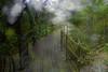 山中遊025 (kingston Tam) Tags: moss grass path hillside hiking field bigtree oddtree garden nature fujifilmxt1