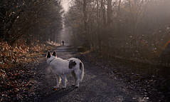 Goodbye 2016 .... (A child in the night) Tags: happynewyear bordercollie season winter distant sheepdog path