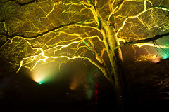 Enchanted Christmas 2016 (smir_001 (on/off)) Tags: westonbirt trees colour winter december plants forest park light night enchanted illumination red orange mystery colourful enchantedwood2016 magical magicallight canoneos7d nature outdoors uk westonbirtarboretum arboretum forestrycommission britishparks parks england southgloucestershire
