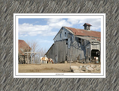 #179 OLD BARN YARD (mdturn1) Tags: barns iowabarns oldbarns farming farm images photos history outbuildings farmshed cowshed shelter stable stall outhouse polebarn vintage classic heritage countryside historicbuildings oldfashioned nostalgic sentimentalfarm nostalgicmemories tradition rurallife rustic pastoral agricultural barnyard barnboard decor decorate decorating office home photoimages canvaspints galleryprints gallery