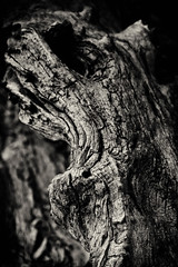 Black Knot (J*Phillips) Tags: wood log knot texture blackandwhite forest brooding dark