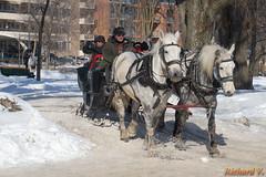Carrioles à chevaux sur les Plaines d'Abraham - 04876 (rivai56) Tags: carrioles à chevaux sur les plaines dabraham québec canada horse hiver winter snow