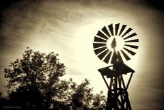 Windstorm....HSS!!! (Joe Hengel) Tags: casperswildernesspark socal southerncalifornia sanjuancapistrano theoc orangecounty oc outdoor tree trees windmill windy sepia blustery california clouds ca cloudsorangecounty goldenstate hss slidersunday slider happyslidersunday