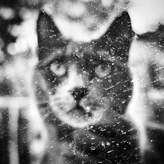 The Mother #3 (Vanvan_fr) Tags: noiretblanc bw nb blackandwhite chat cat animaldecompagnie animalplanet dof profondeurdechamp carré square squareformat portrait dirty regard expression look eyes fenêtre window behindthewindow dirtyportrait france photo gr