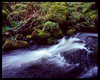The creek at Spring 4x5 - Fuji Velvia 50 (magnus.joensson) Tags: sweden swedish skåne söderåsen natinalpark linhof technikardan 45 fujinon cmw 125mm e6 4x5 large format fuji velvia 50 hasselblad flextight x5 scan green spring