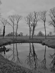 Lyveden (Oxford Murray) Tags: winter lyveden northmptonshire reflection stark lake landscape oxfordmurray nationaltrust nt