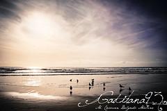 Un momento mágico (Gaditana93) Tags: cadiz playa cádiz cortadura victoria mar arena gaviota pajaro cielo morado azul gaditana93 2017 canon400d maríadelcarmendelgadomaline