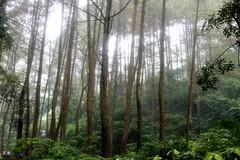 Nature 10