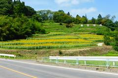 Oonami castle ruins (Stop carbon pollution) Tags: japan 日本 honshuu 本州 touhoku 東北