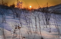 Fragile beauty .. (tferi666) Tags: winter nature nice best beautiful fantastic amazing night sony ilce next alpha a6300 sonyflickraward sonyflickrawardgold 18105mm hungary magyar zemplénhegység ngc