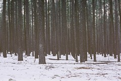 Tumultuous Decay (Marc Rodriguez 24) Tags: fujifilm fuji pro 400h nikon f3 f3hp nikkor 50mm 14 5014 ais prime lens 35mm c41 color negative enhanced film grain analog photography analogue pine trees forest woods deserted atmosphere winter flagstaff arizona snowtography