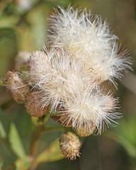 D174723A (RobHelfman) Tags: losangeles flowers kennethhahnstaterecreationarea