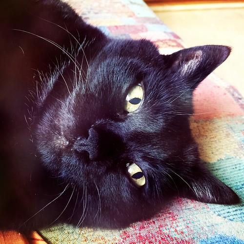 Flix #cat #kater #katze