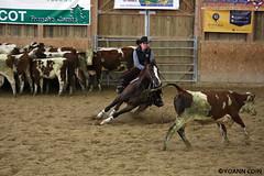 BJ1A8603 (yoann.coin) Tags: horse france western cutting ncha remoray