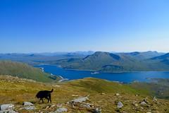 Scotland Hiking 2015 (olythompson) Tags: light summer blackandwhite mountain black mountains nature monochrome landscape scotland labrador outdoor hiking highland loch munro quoich sgurr amhaoraich