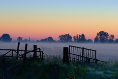 Hek (zsnajorrah) Tags: rural polder fence animals cows mist fog church trees dawn earlymorning sky silhouette 7dmarkii netherlands haarlem dietsveld explore ef70200mmf4l