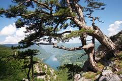 Serbia - priroda,drvo, lokacije, drina, Tara