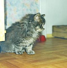 00373 (d_fust) Tags: cat kitten gato katze 猫 macska gatto fust kedi 貓 anak katt gatito kissa kätzchen gattino kucing 小貓 고양이 katje кот γάτα γατάκι แมว yavrusu 仔猫 का बिल्ली बच्चा