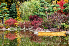 Tranquil Moments...Explored 10/24/15 (LotusMoon Photography) Tags: autumn trees lake plant color reflection water garden landscape japanesegarden boat pond colorful outdoor peaceful calm foliage rowboat serene vividcolor
