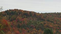 Fall Leaves (Jackie***) Tags: autumn fallleaves mountains rain fog fallcolors pumpkins autumnleaves blueridgeparkway blowingrock autumncolor boonenc fallmums
