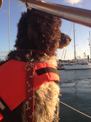 """dog friend navigating"" (keywestsailingadventure) Tags: seadog dogdayafternoon petslovesea"