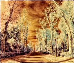 (2190) Parc Ribalta (IR & Fisheye world) (QuimG) Tags: ir golden olympus fisheye infrared pasvalenci specialtouch castelldelaplana fotografainfrarroja quimg quimgranell joaquimgranell afcastell obresdart