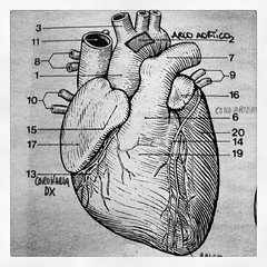 heart #cuore #aorta #coronarie #anatomy #anatomia... (Fabrizio Cardinale) Tags: illustration sketch heart drawing anatomy cuore disegno aorta anatomia illustrazione coronarie uploaded:by=flickstagram instagram:photo=44852636680285942732687964