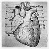 heart #cuore #aorta #coronarie #anatomy #anatomia... (Fabrizio Cardinale) Tags: illustration sketch heart drawing anatomy cuore disegno aorta anatomia illustrazione coronarie uploaded:by=flickstagram instagram:photo=44852636680285942732687964