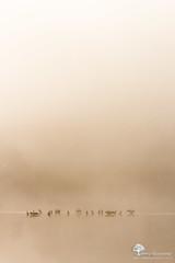 L'veil (photosenvrac) Tags: loire brume leverdesoleil fleuve cormoran sigma150 thierryduchamp