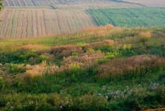 Poranna mgła 14 (Hejma (+/- 5400 faves and 1,7 milion views)) Tags: green nature yellow fog landscape outside poland polska august natura zielony mgła lightandshade żółty światłoicień krajobraz sierpień acclivity cultivations wzniesienie uprawy chłopskiepola płaskowyżproszowicki peasantfields plateauproszowicki