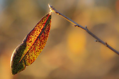 Leaf (1 of 1) (tolli_photography) Tags: blue orange brown green water leaves yellow leaf sticks pond branches awesome