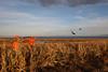 South Dakota Luxury Pheasant Lodge - Gettysburg 50