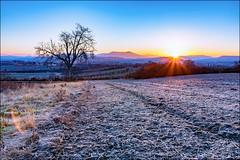 Lever de soleil hivernal - Winter Sunrise (cleostan) Tags: lever de soleil sunrise auvergne la roche blanche france cleostan nikon tamron givre froid hiver winter 2017 sun sky tree landscape puydedome