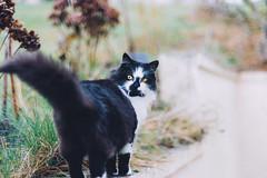 Baya (Roxo15) Tags: 2016 50mmf14 baya bokeh d7100 lieux nikon stmamet vsco animaux cat chat
