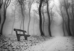 Woods with a twist (RobertFenyo) Tags: winter woods trees tree cold surreal dreamy blackwhite