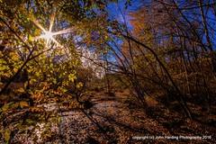 Autumn In The Wetlands (T i s d a l e) Tags: tisdale autumninthewetlands farm field wetlands swamp bog sanctuary november 2016 easternnc